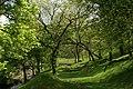 Footpath, Park Wood - geograph.org.uk - 174605.jpg