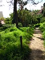 Footpath and Steps down to the Praia dos Aveiros 5 March 2015.JPG