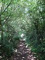 Footpath to Combe Haven (3) - geograph.org.uk - 1358873.jpg
