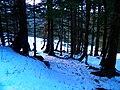 Forêt (3).jpg