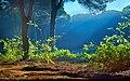 Forest (8500260830).jpg