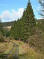Forest Track - geograph.org.uk - 400183.jpg