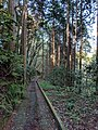 Forest path in Hakone region.jpg