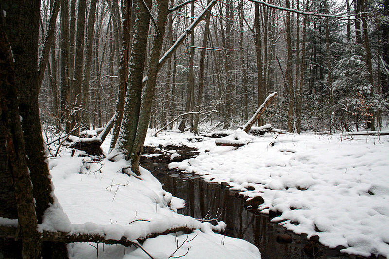 File:Foreststream2 - West Virginia - ForestWander.jpg