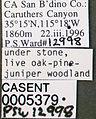 Formica xerophila casent0005379 label 1.jpg