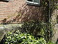 Fowering flora and creepers in the facade-garden of a former warehouse; Amsterdam-Centrum, 2013.jpg