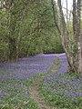 Foxley Wood, Norfolk - geograph.org.uk - 33152.jpg