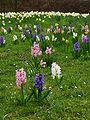 Frühlingsblumenwiese.JPG