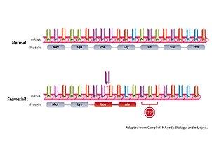 Gene knockout - Wikipedia