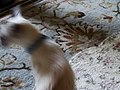 Friendly cat, 2016 09 13 -d,jpg - panoramio.jpg