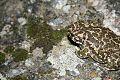 Frog camouflage.jpg