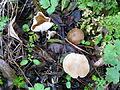 FungiHilden (3).JPG