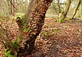 Fungus, Woodburn forest near Carrickfergus - geograph.org.uk - 724790.jpg