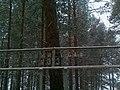 G. Berezovskiy, Sverdlovskaya oblast', Russia - panoramio (1).jpg
