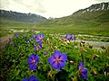 GB Deosai National Park -4.jpg