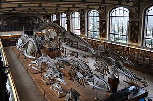 Galerie de paléontologie et d'anatomie comparée - Image: Galerie danatomie comparee