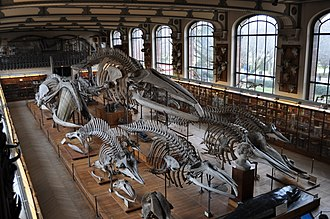 Gallery of Paleontology and Comparative Anatomy - Image: Galerie danatomie comparee