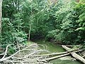 Galien River downstream from Warren Woods trail bridge 2011-08-07.JPG