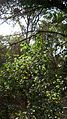Garden Way - Wall - trees - streamlet - 17 Shahrivar st - Nishapur 15.JPG