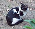 Gato callejero en Madrid 02.jpg