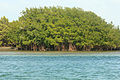 Gfp-florida-biscayne-national-park-island-of-mangroves.jpg