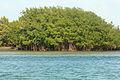 Gfp-florida-biscayne-national-park-island-of-mangroves.jpg
