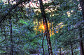 Gfp-michigan-porcupine-mountains-state-park-sunset-between-trees.jpg