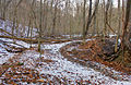 Gfp-missouri-weldon-springs-winter-forest.jpg