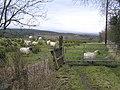 Glen East - geograph.org.uk - 1166652.jpg