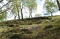 Glen Truim birchwoods - geograph.org.uk - 432529.jpg