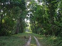 Gorumara Deep Forest Arnab Dutta.JPG