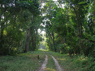 Gorumara National Park - A road inside the park