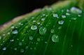 Gotas de lluvia..jpg