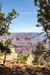 The Grand Canyon framed by desert trees
