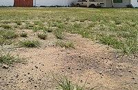 Gravel-turf2.jpg