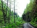 Green Nature (108895027).jpeg
