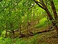 Greenery (2).jpg