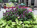 HK 上環 Sheung Wan 新紀元廣場 Grand Millennium Plaza garden purple planter June-2012.JPG