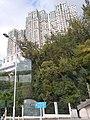 HK 城巴 CityBus 962B view 荃灣區 Tsuen Wan District 青山公路 Castle Peak Road November 2019 SS2 55.jpg