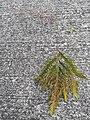 HK PK 香港登高 hiking 山頂 Victoria Peak 舊山頂道 Old Peak Road green leaves April 2020 SS2 01.jpg