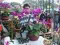 HK SSP Fa Hui Park Fair 蝴蝶蘭 Phalaenopsis Dealer.JPG