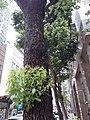 HK WC 灣仔 Wan Chai 皇后大道東 Queen's Road East May 2020 SS2 19.jpg