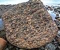 Haida Gwaii (Queen Charlotte Islands) - Graham Island - interesting rocks on the Hecate Strait shoreline near Balance Rock - (21560229585).jpg