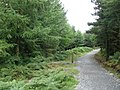 Haldon Forest Trail - geograph.org.uk - 1429445.jpg