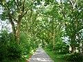 Hanstedter Weg in Tellmer - geo.hlipp.de - 30656.jpg