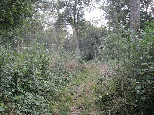 Hardwick Wood 7