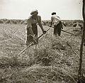 Harvest Fortepan 92236.jpg