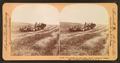 Harvesting in the great West, combined reaper and thresher, Washington, U.S.A, by Keystone View Company.png