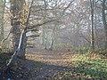 Haste Hill Wood - geograph.org.uk - 89627.jpg