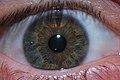 Hazel Eye -2.JPG